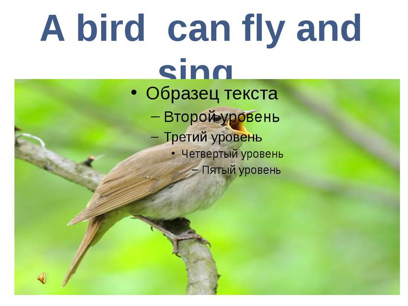 A bird can fly and sing.