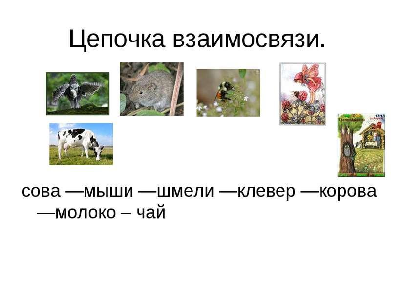 Цепочка взаимосвязи. сова —мыши —шмели —клевер —корова —молоко – чай