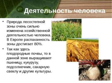 Деятельность человека Природа лесостепной зоны очень сильно изменена хозяйств...