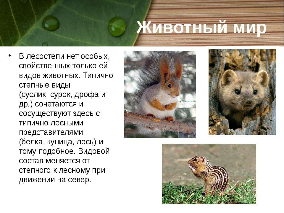 Животный мир В лесостепи нет особых, свойственных только ей видов животных. Т...