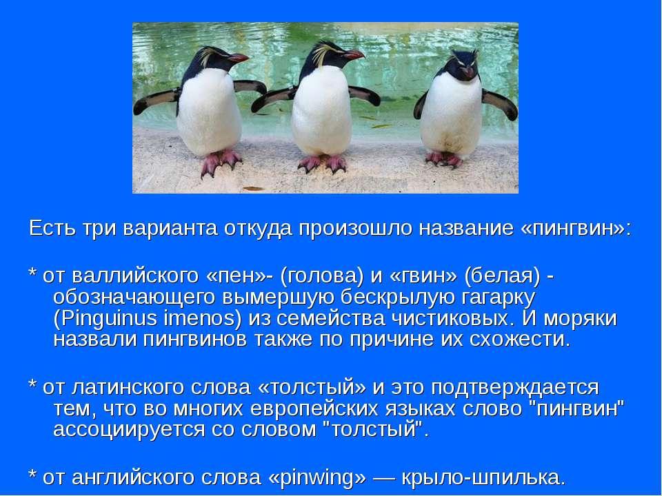 Есть три варианта откуда произошло название «пингвин»: * от валлийского «пен»...