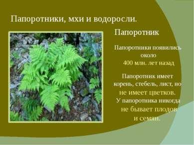 Папоротники, мхи и водоросли. Папоротник Папоротник имеет корень, стебель, ли...