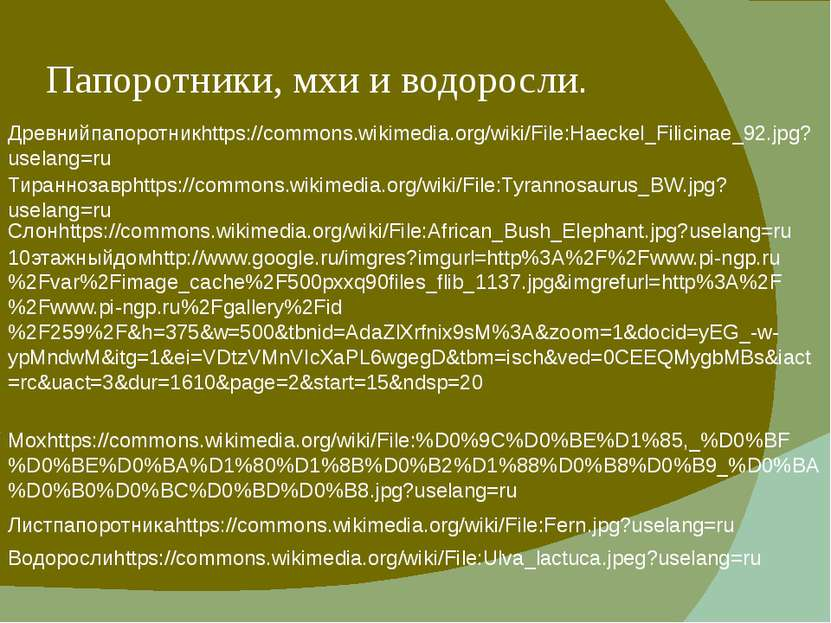 Папоротники, мхи и водоросли. Древнийпапоротникhttps://commons.wikimedia.org/...