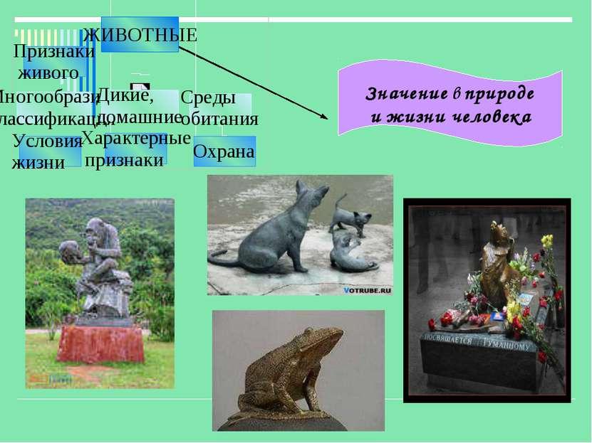 Значение в природе и жизни человека