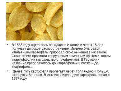 В 1565 году картофель попадает в Италию и через 15 лет получает широкое распр...