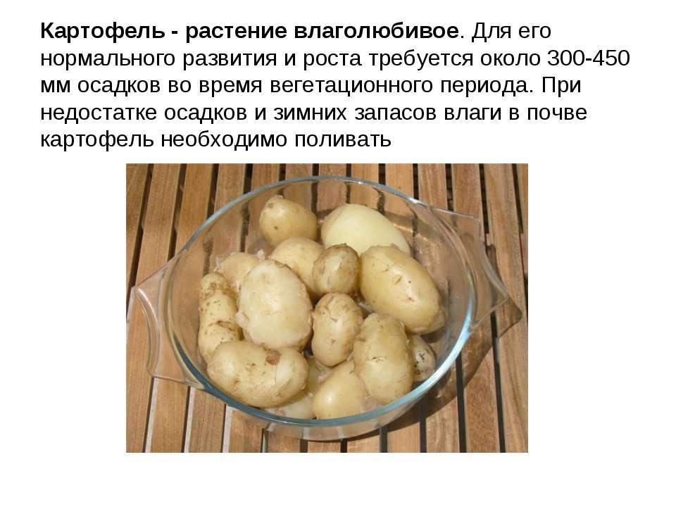 Картофель - растение влаголюбивое. Для его нормального развития и роста требу...