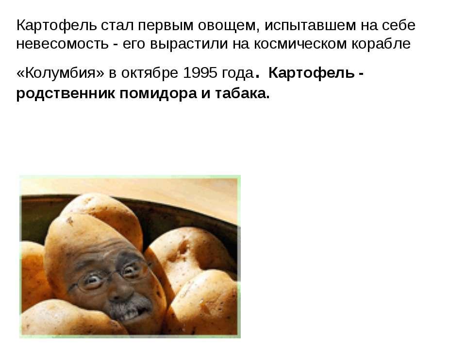 Картофель стал первым овощем, испытавшем на себе невесомость - его вырастили ...