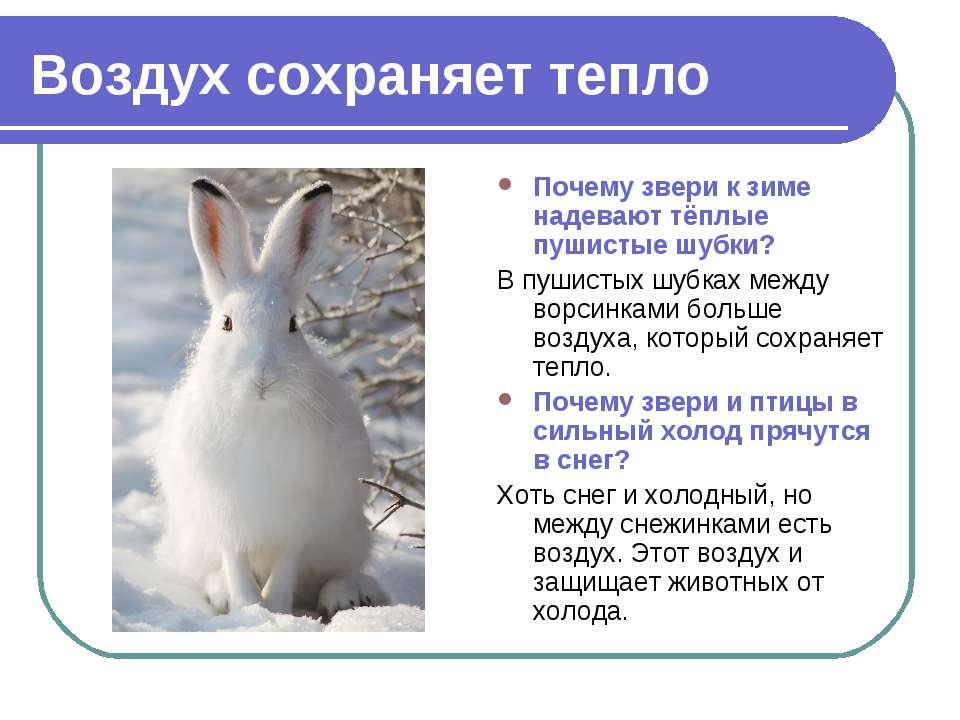 Воздух сохраняет тепло Почему звери к зиме надевают тёплые пушистые шубки? В ...