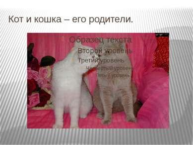 Кот и кошка – его родители.