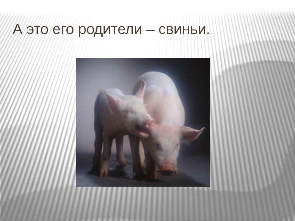 А это его родители – свиньи.