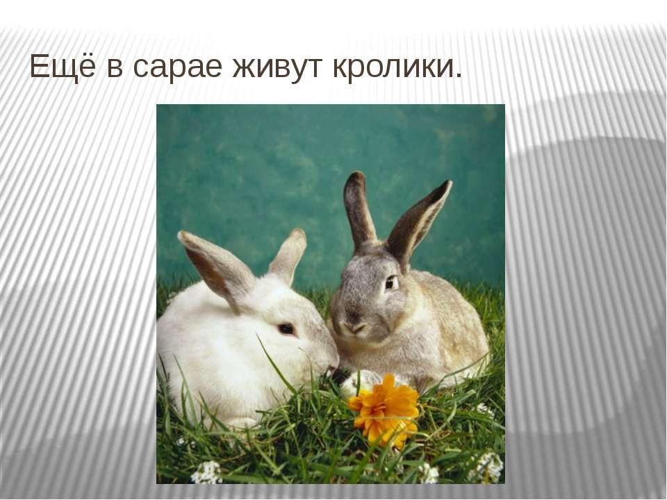 Ещё в сарае живут кролики.