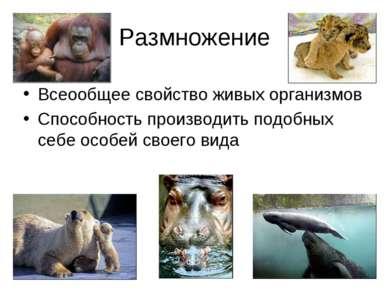 Размножение Всеообщее свойство живых организмов Способность производить подоб...