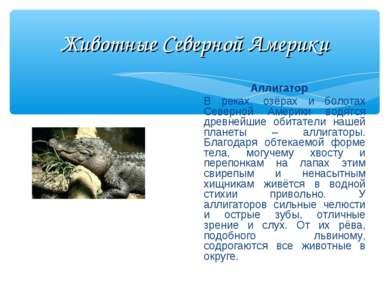 Животные Северной Америки Аллигатор В реках, озёрах и болотах Северной Америк...