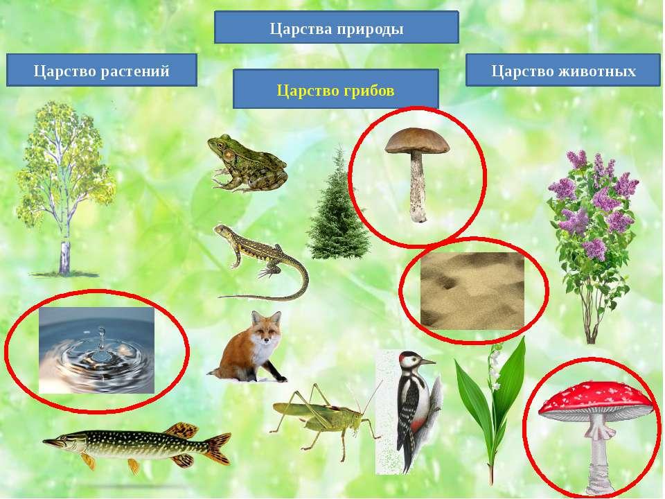 Царства природы Царство животных Царство растений Царство грибов