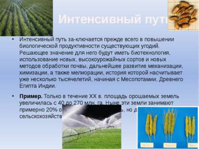 Интенсивный путь Интенсивный путь за ключается прежде всего в повышении биоло...