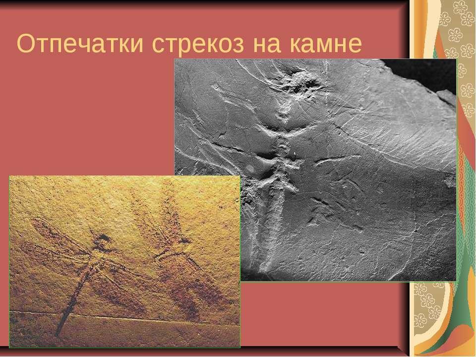 Отпечатки стрекоз на камне