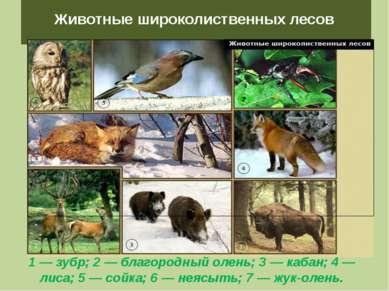 Животные широколиственных лесов 1 — зубр; 2 — благородный олень; 3 — кабан; 4...
