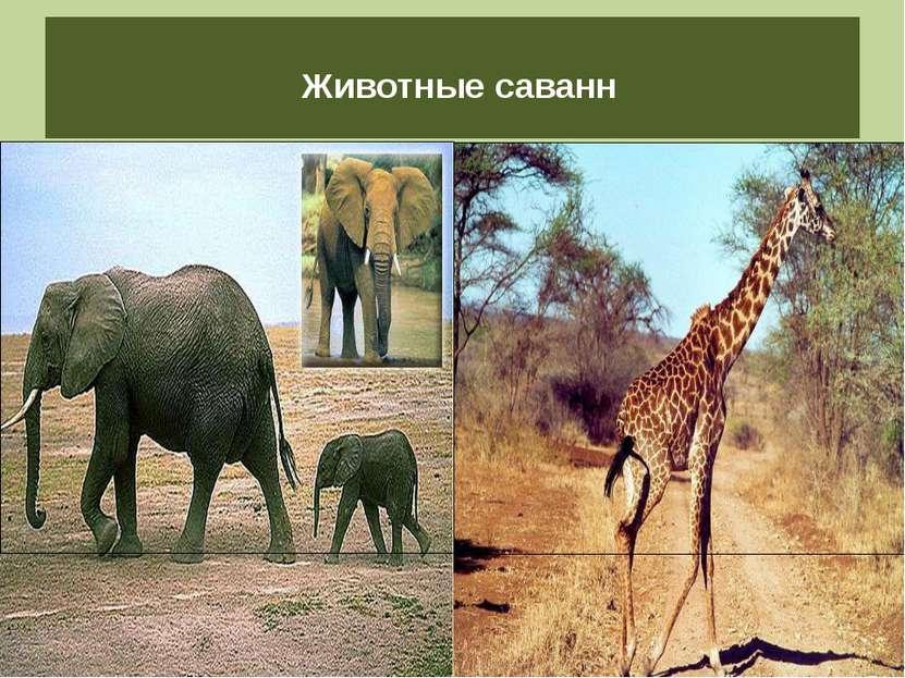Животные саванн