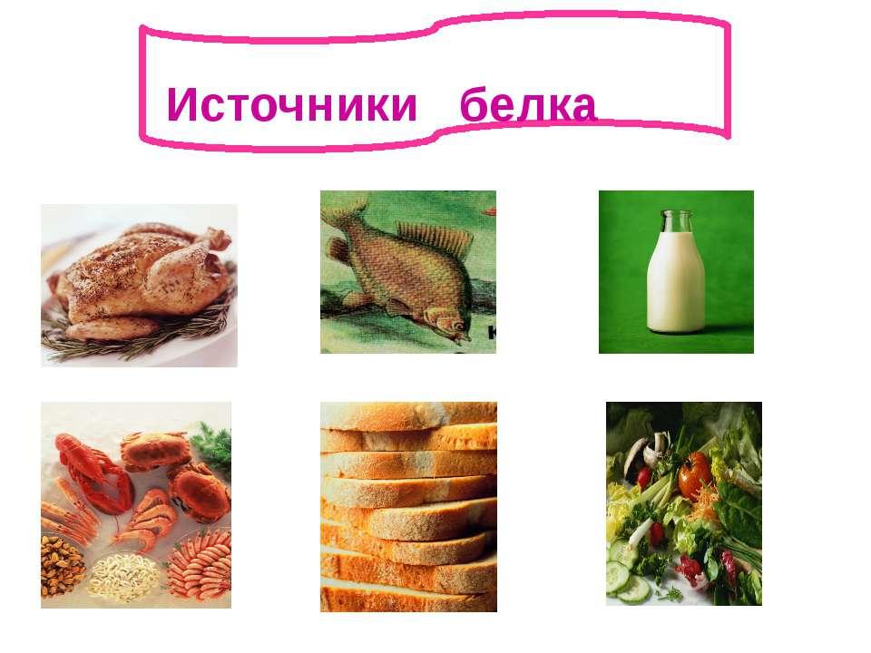 ии Источники белка
