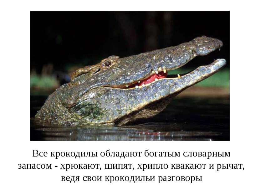 Все крокодилы обладают богатым словарным запасом - хрюкают, шипят, хрипло ква...
