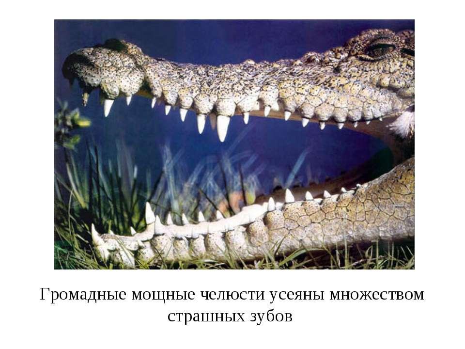 Громадные мощные челюсти усеяны множеством страшных зубов