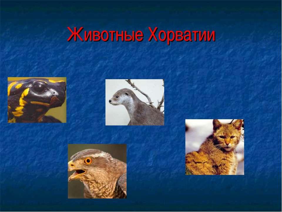 Животные Хорватии