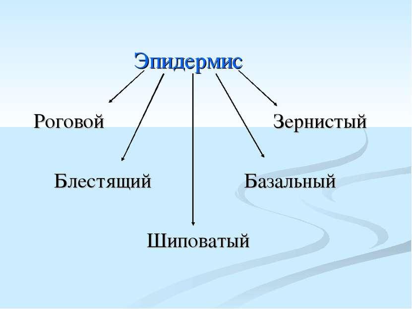 Эпидермис Роговой Зернистый Блестящий Базальный Шиповатый