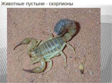 Животные пустыни - скорпионы