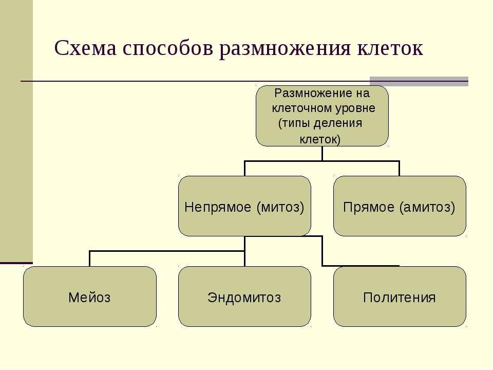 Схема способов размножения