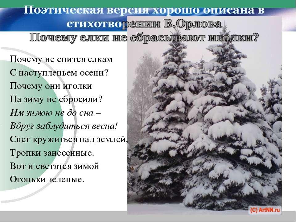 Почему не спится елкам С наступленьем осени? Почему они иголки На зиму не сбр...