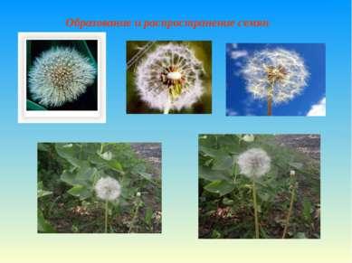 Образование и распространение семян