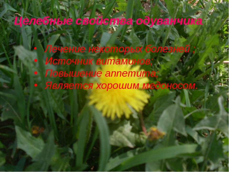 Целебные свойства одуванчика. Лечение некоторых болезней ; Источник витаминов...