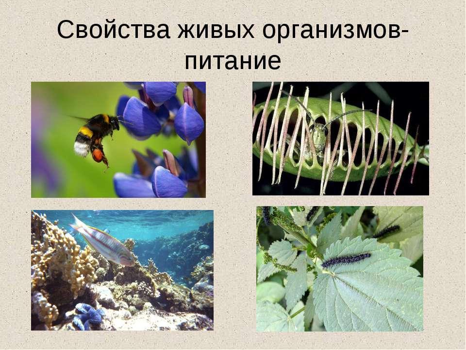 Свойства живых организмов- питание