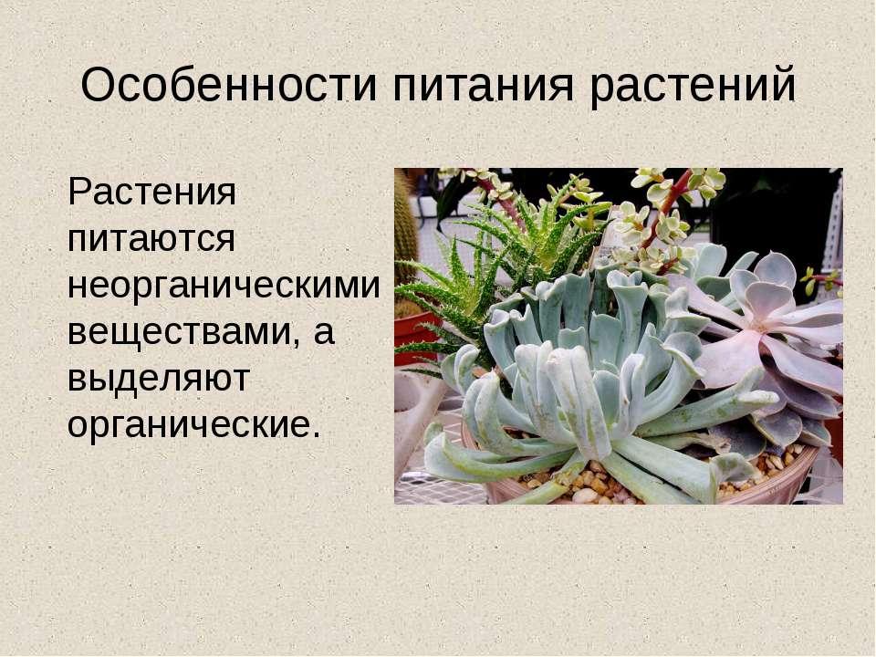 Презентация На Тему Питание Растений 2 Класс Пнш