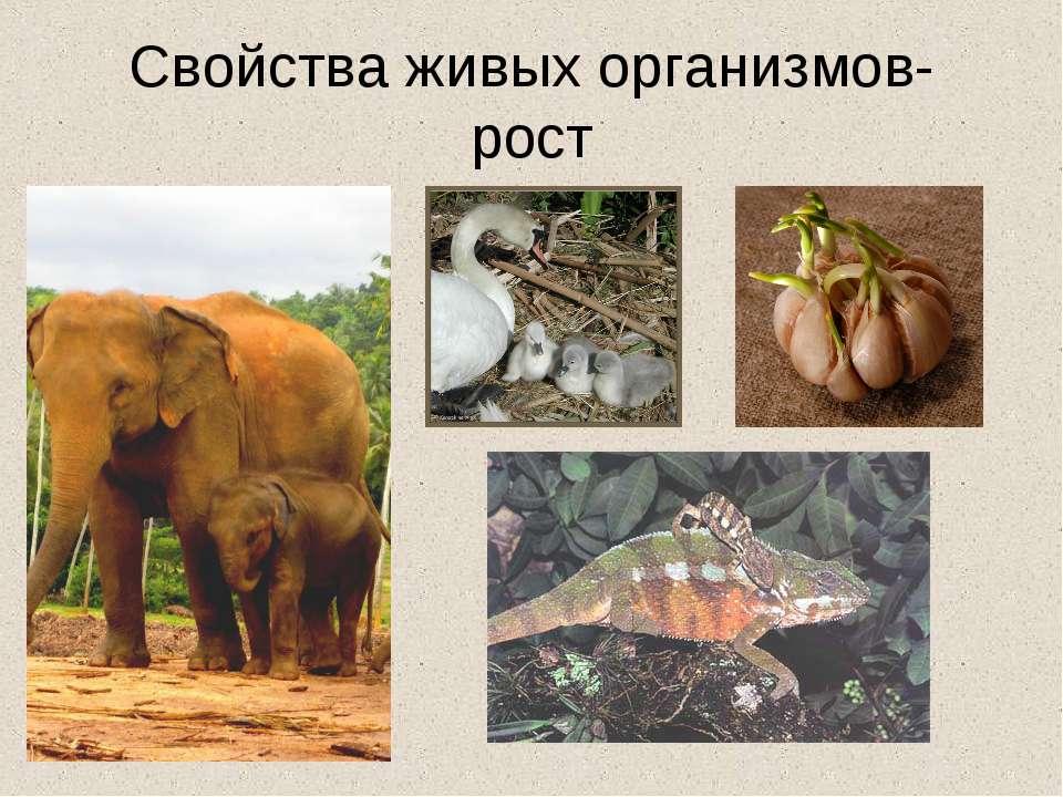 Свойства живых организмов- рост