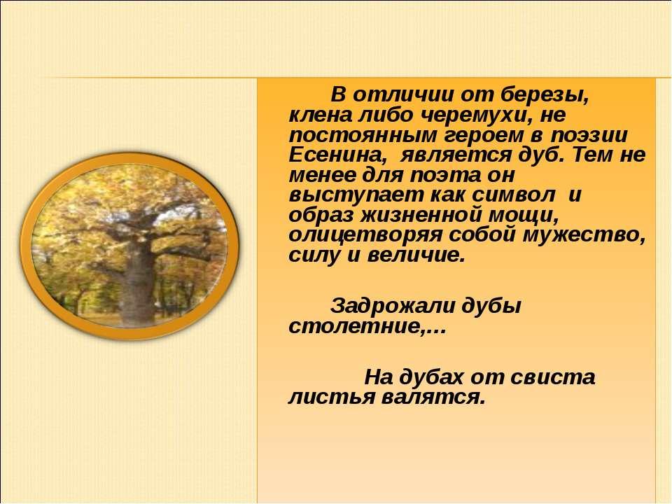 В отличии от березы, клена либо черемухи, не постоянным героем в поэзии Есени...