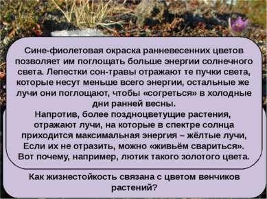 Цветок сон-травы, как и цветки других ранневесенних растений, например медуни...