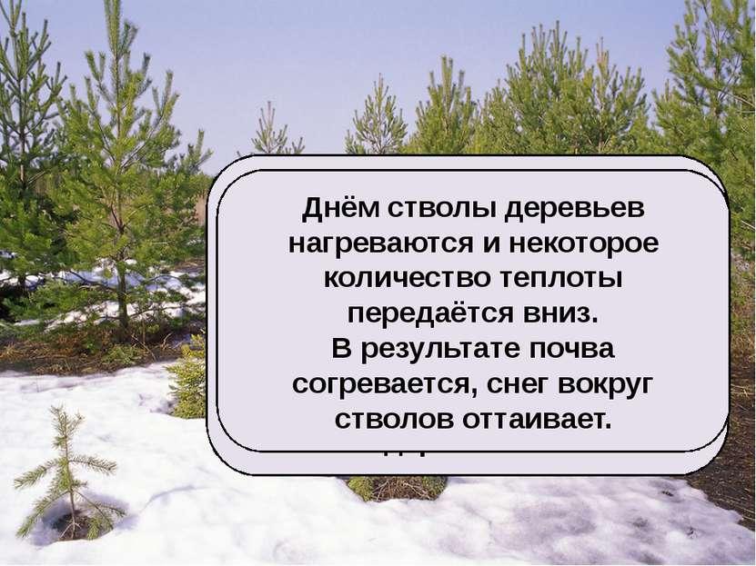 Признаки наступившей весны – проталины, которые чаще всего образуются возле д...