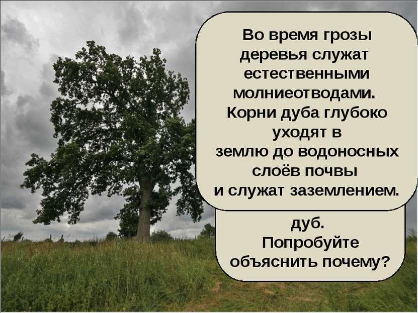 В грозу во время дождя и молнии нельзя прятаться под деревьями. Особенно опас...