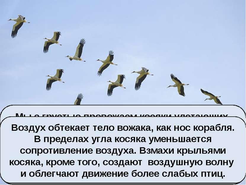 Мы с грустью провожаем косяки улетающих на зимовку птиц, и радостно встречаем...