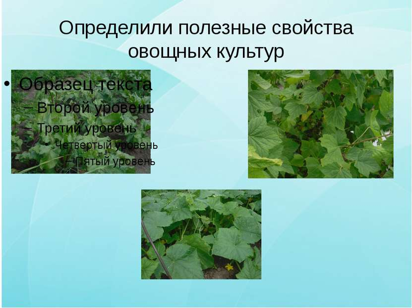 Определили полезные свойства овощных культур