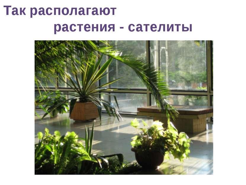 Так располагают растения - сателиты