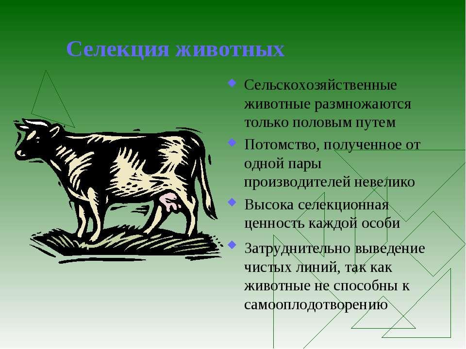 Селекция животных Сельскохозяйственные животные размножаются только половым п...