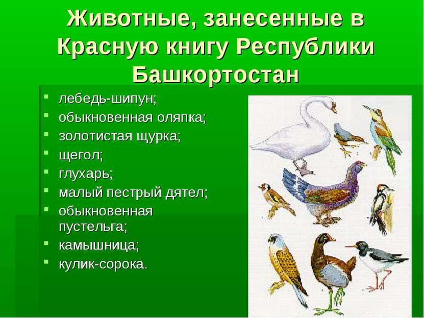 Животные, занесенные в Красную книгу Республики Башкортостан лебедь-шипун; об...