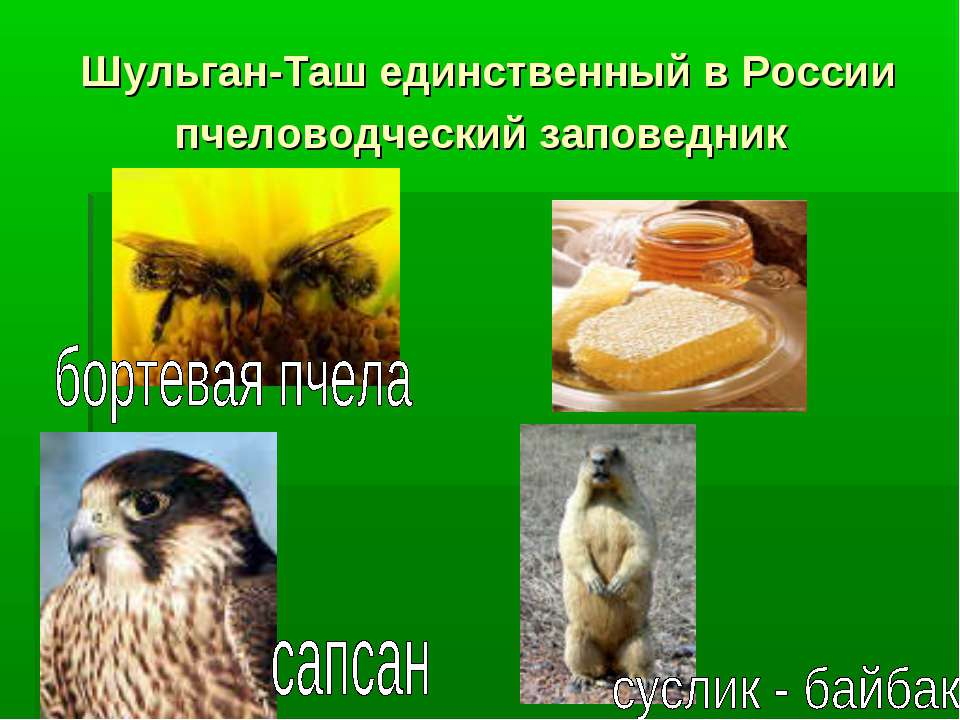 Шульган-Таш единственный в России пчеловодческий заповедник
