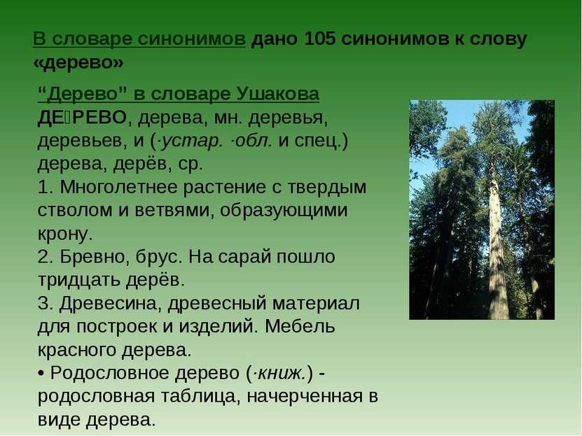 """В словаре синонимов дано 105 синонимов к слову «дерево» """"Дерево"""" в словаре Уш..."""