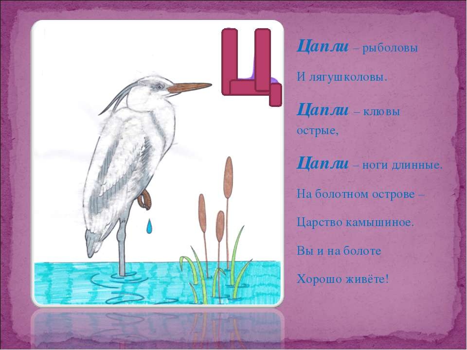 Цапли – рыболовы И лягушколовы. Цапли – клювы острые, Цапли – ноги длинные. Н...