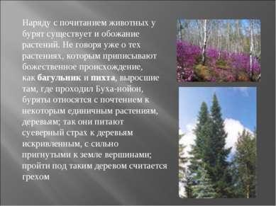 Наряду с почитанием животных у бурят существует и обожание растений. Не говор...