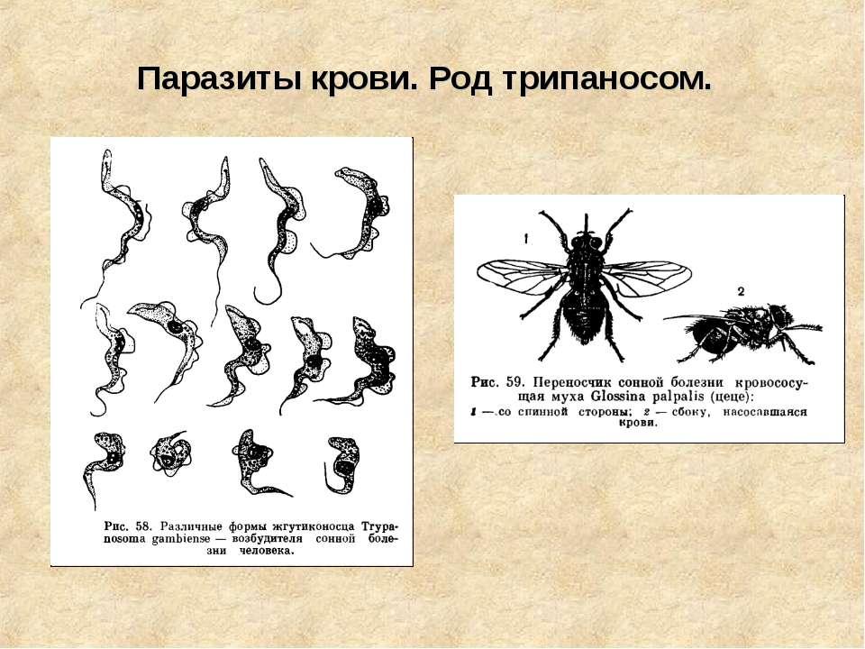 паразиты в крови человека симптомы и