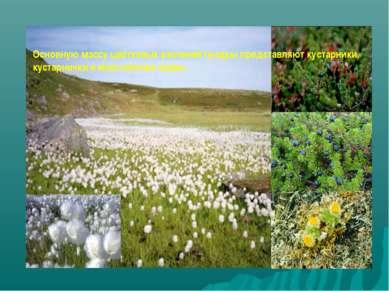 Основную массу цветковых растений тундры представляют кустарники, кустарнички...